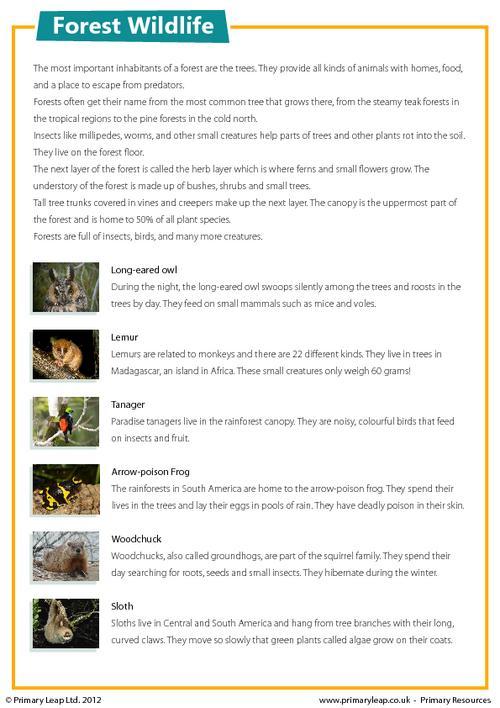 Forest wildlife - Comprehension