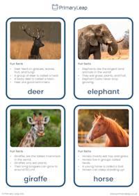 Herbivores flashcards