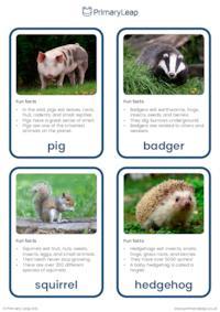 Omnivores flashcards
