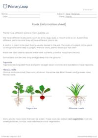 Parts of a plant - Roots (information sheet)