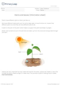 Parts of a plant - stems and leaves information sheet 1