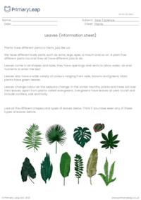 Parts of a plant - stems and leaves information sheet 2