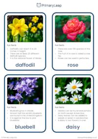 Common flowers and plants flashcards