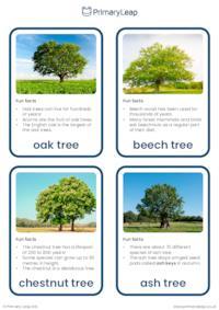 Trees flashcards