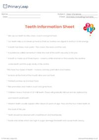 Teeth - Fact sheet