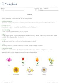 Plants information sheet