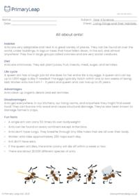 Ants information sheet