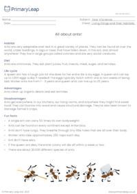 Ants information sheet