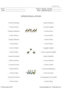 Collective Nouns - Animals