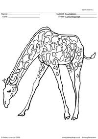 Giraffe colouring page