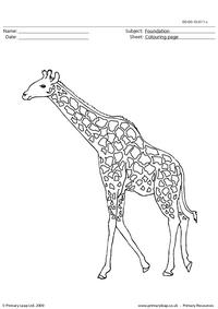 Giraffe 2 colouring page