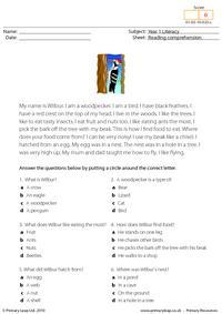 Reading comprehension - I am a woodpecker