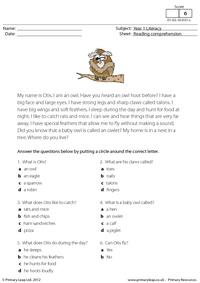 Reading comprehension - Otis the owl