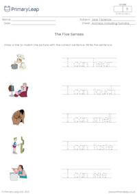 The five senses - matching pictures