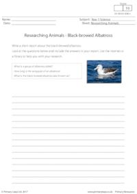 Researching Animals - Black-browed Albatross