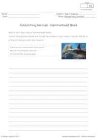 Researching Animals - Hammerhead Shark