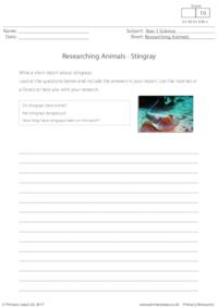 Researching Animals - Stingray