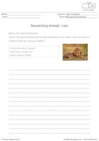 Researching Animals - Lion