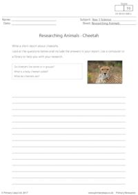 Researching Animals - Cheetah