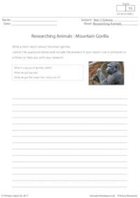 Researching Animals - Mountain Gorilla