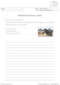 Researching Animals - Zebra