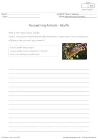 Researching Animals - Giraffe