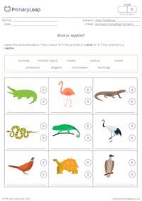 Identify animals - Bird or reptile?