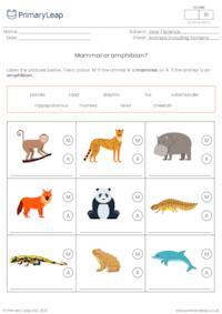 Identify animals - Mammal or amphibian?