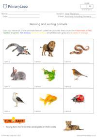 Naming and sorting animals 1