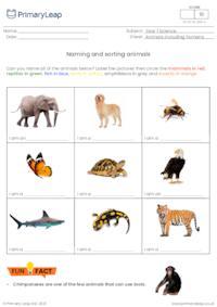 Naming and sorting animals 2
