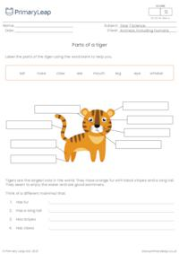 Label the parts of a tiger