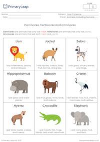 Sorting activity - Carnivore, herbivore or omnivore?