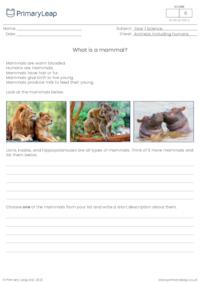 Introduction to mammals