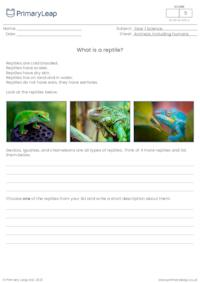 Introduction to reptiles