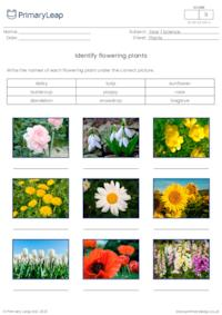 Identify flowering plants