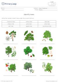 Identify trees