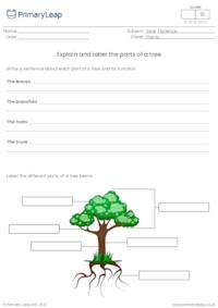 Explain and label the parts of a tree