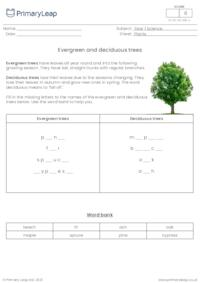 Evergreen and deciduous trees
