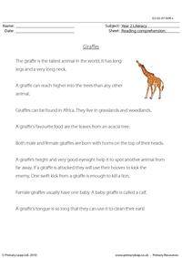 Reading comprehension - Giraffes (non-fiction)