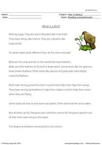 Reading comprehension - What is a Bird? (non-fiction)