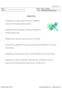 Reading comprehension - Dragonflies (non-fiction)