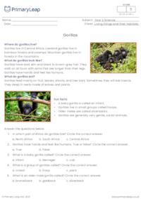 Gorillas comprehension