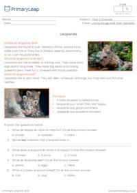Leopards comprehension