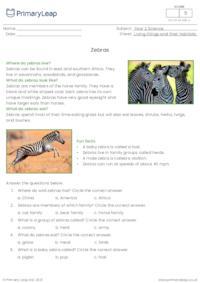 Zebras comprehension