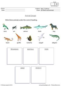Animal groups 1