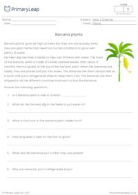 Banana plants comprehension