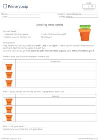 Growing cress investigation