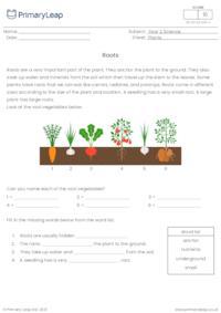 Plant parts: Roots