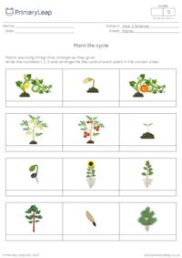 Plant life cycle - Ordering activity