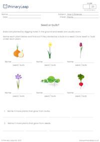 Seed or bulb?